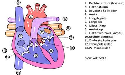 Echocardiografie
